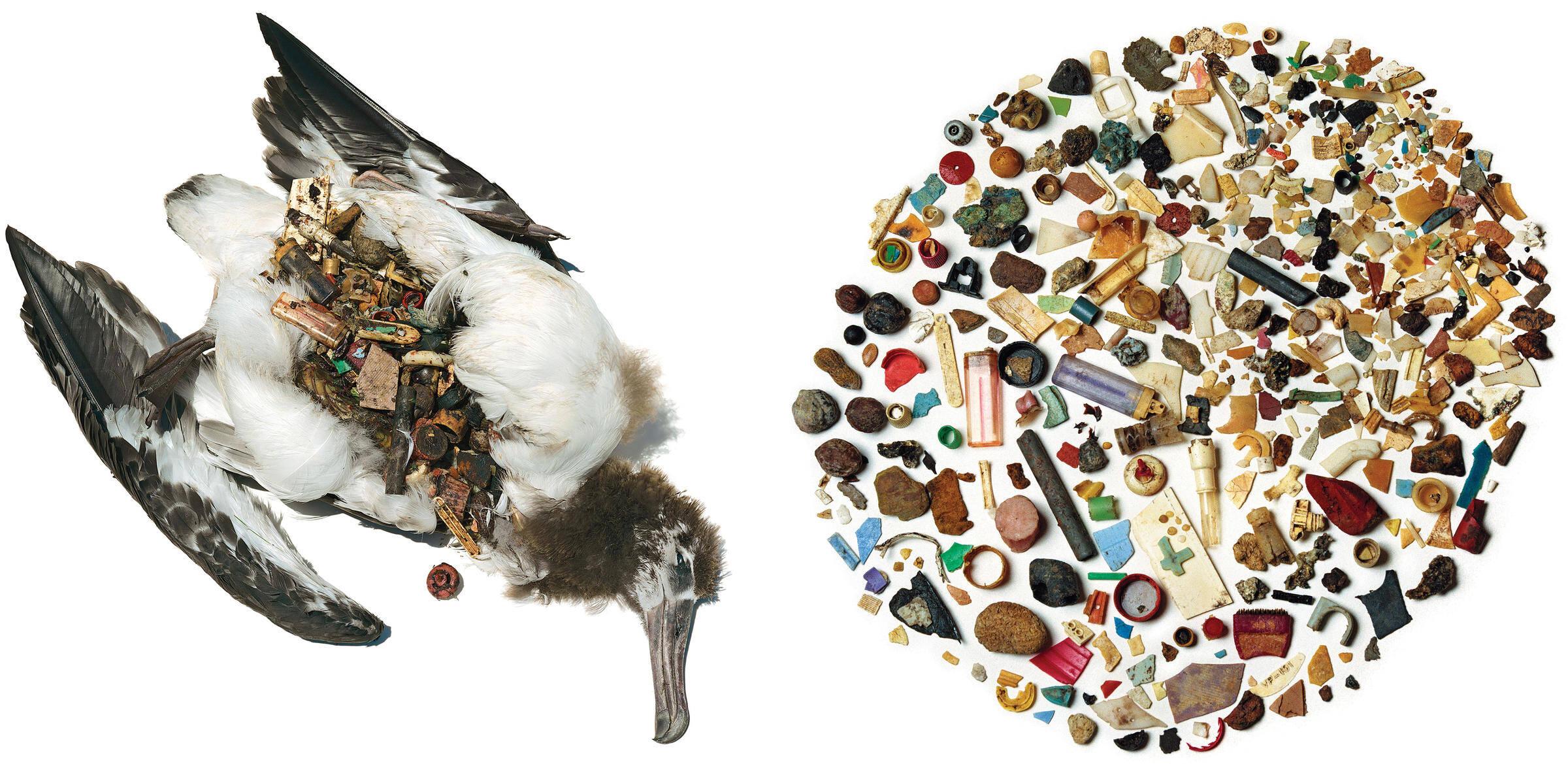 ptaki morskie 1b