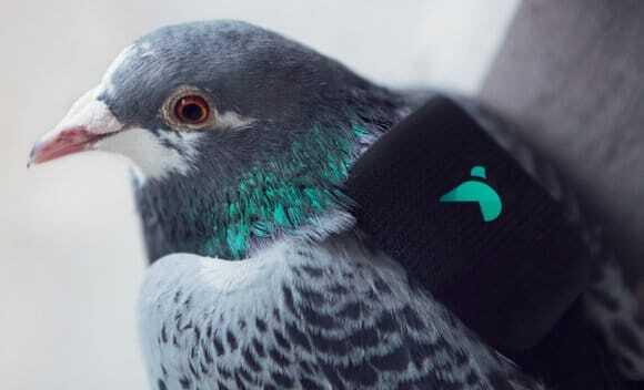 golebie monitorujace jakosc powietrza