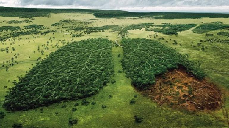 norwegia liderem walce przeciwko wylesianiu