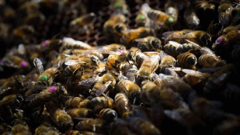 czy glifosat w roundupie jest szkodliwy dla pszczol a co z ludzmi