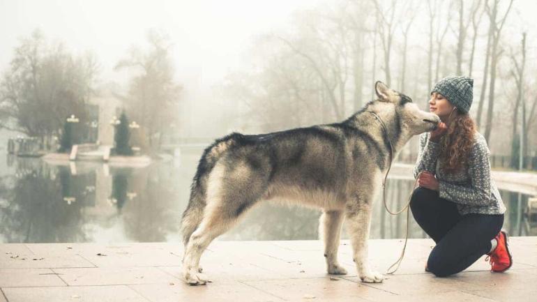 fundusz wspierania adopcji zwierzat ii podsumowanie