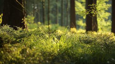 jak uzyskac korzysci zdrowotne plynace z natury skoro utknelismy w domach