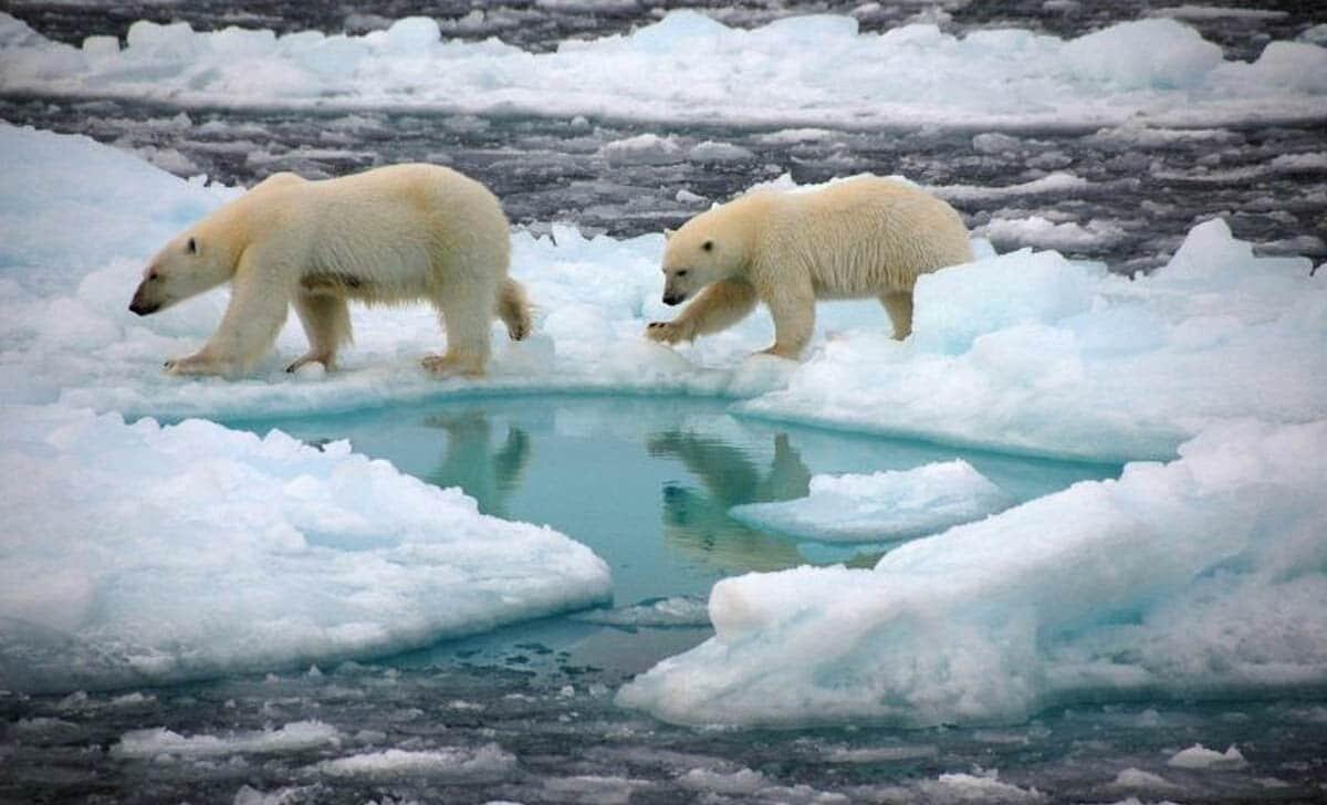 wkrotce biegun polnocny latem bez lodu