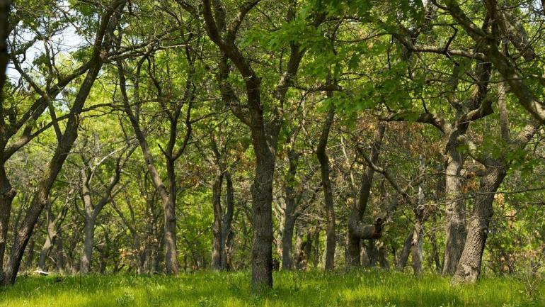 globalne zmiany srodowiskowe prowadza do wiekszej ilosci mlodszych i nizszych lasow