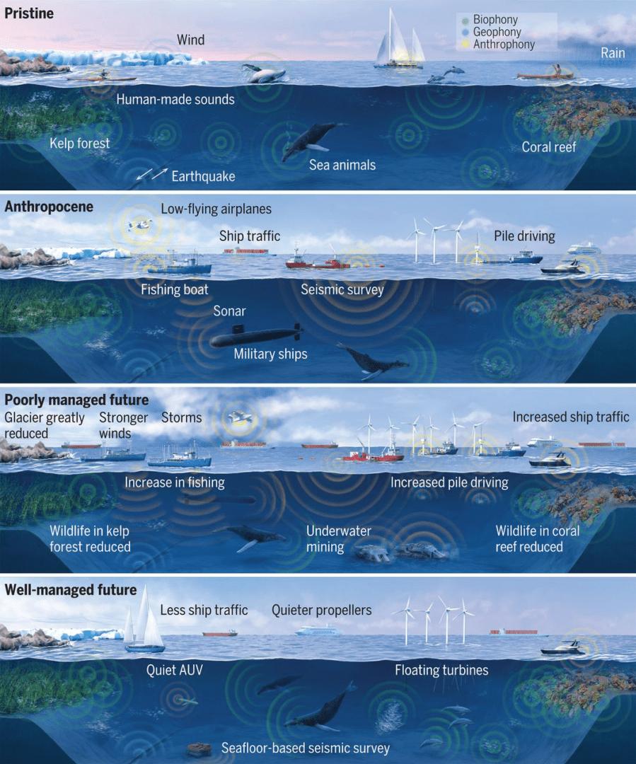 zdrowe oceany potrzebuja zdrowych krajobrazow dzwiekowych 2