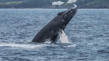 zdrowe oceany potrzebuja zdrowych krajobrazow dzwiekowych