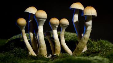 zwiazek magicznych grzybkow moze lagodzic ciezka depresje